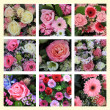 Mixed pink flower collage — Stock Photo