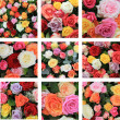 Multicolor rose collage — Stock Photo