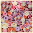 Pastel rose collage — Stock Photo