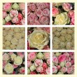 Pink and white roses collage — Stock Photo