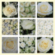 White rose collage — 图库照片