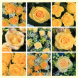 Yellow rose collage — Stock Photo