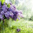 Brunch of lilacs in bucket — Stock Photo