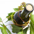 Wine bottle and young grape vine — Stock Photo #10514357