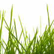 Young juicy green grass — Stock Photo #10519160