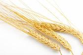 穀物の耳 — ストック写真