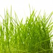 Young juicy green grass — Stock Photo #10527941