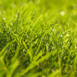 Young juicy green grass — Stock Photo #10528077
