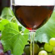 Wine composition — Stock Photo #10528140