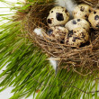 Egg in a real nest — Stock fotografie