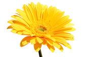 Beautiful yellow flower petals closeup — Stock Photo