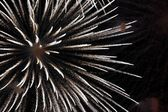 Firework in honor of Independence Day — Stock Photo