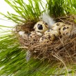 Egg in a real nest — Stok fotoğraf