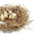 Egg in a real nest — Stockfoto