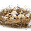 Egg in a real nest - Stock Photo
