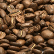 Coffee bean — Stock Photo #10553924