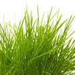 Young juicy green grass — Stock Photo #10605801