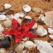 Royalty-Free Stock Photo: Lovely seashells against