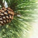 bont-boomtak met een fruit — Stockfoto