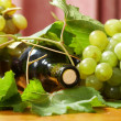 Wine bottle and young grape vine — Stock Photo #10629831