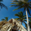 Palm tree in the blue sky — Stock Photo