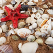 Lovely seashells against — Stock Photo