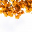 Autumn, yellow leaves — Stock Photo