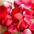 Petals of a rose — Stock Photo #9039390