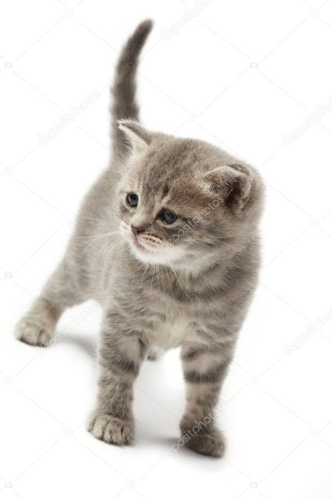 壁纸 动物 猫 猫咪 小猫 桌面 682_1023 竖版 竖屏 手机