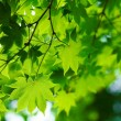 Beautiful green leaves — Stock Photo #9151000