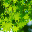 Beautiful green leaves — Stock Photo #9151032
