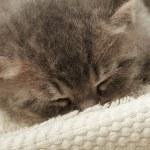 Funny kitten — Stock Photo