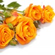 Orange roses — Stock Photo #9640876