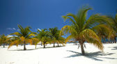 Palm trees on the beach — Stockfoto