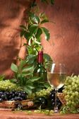 White dry wine, fresh clusters of a grapes — Stock Photo