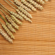 Grain ears — Stock Photo #9769287