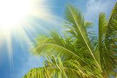 Branche de palmier dans le ciel bleu — Photo
