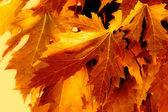 Fall yellow — Stock Photo