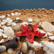 Lovely seashells against — Stock fotografie