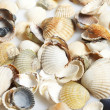 Seashells — Stock Photo #9833128