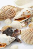 Lovely seashells against — Stock Photo