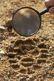 Magnifier, trekkers boot print — Stock Photo