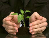 Business men a plant between hands — Stockfoto