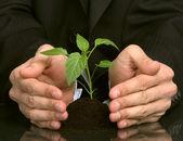 Obchodní lidé rostlinu mezi rukama — Stock fotografie