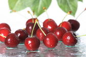 Cherry on a white background — Stock Photo