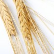 Grain ears — Stock Photo #9862386