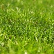 Young juicy green grass — Stock Photo #9891433