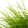 Young juicy green grass — Stock Photo #9892121