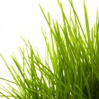 Young juicy green grass — Stock Photo #9913063