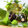 Wine bottle and young grape vine — Stock Photo